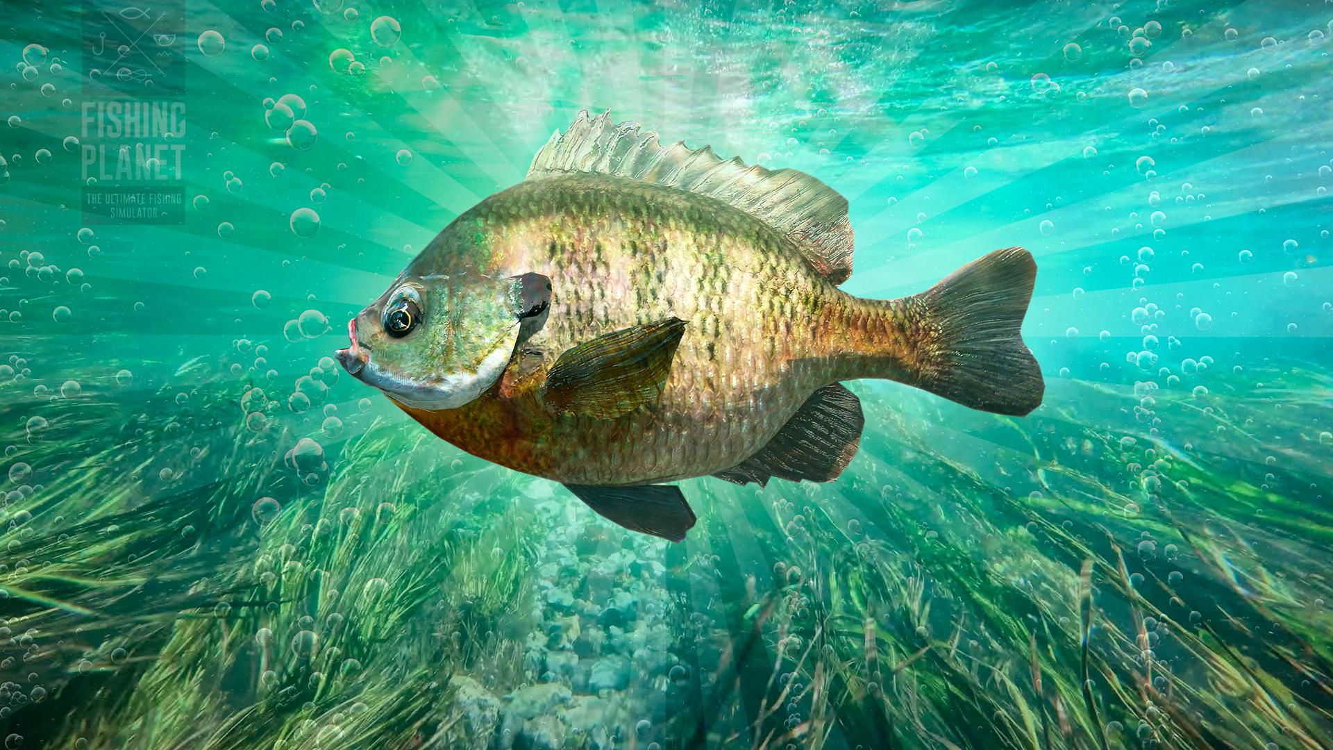 Panfish Overlord